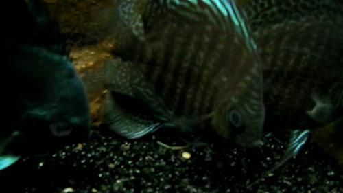 壁纸 动物 海底 海底世界 海洋馆 水族馆 鱼 鱼类 500_281